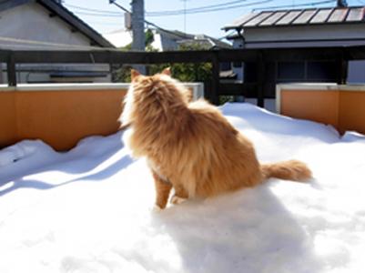 シェン2014雪の後.jpg