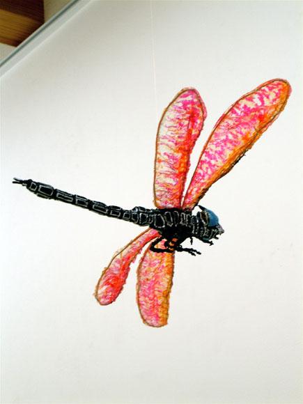 龍骨蜻蛉.jpg
